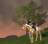 Roaming around the country &Mounts!